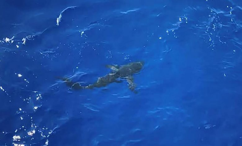 A shark headed for swimmers. Watch what the Coast Guard did