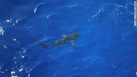 The coast guard belives that the shark was a Long-Fin Mako or Pelagic Thresher shark.