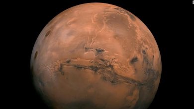 Photo of Elon Musk wants to settle on Mars. Is it profitable?