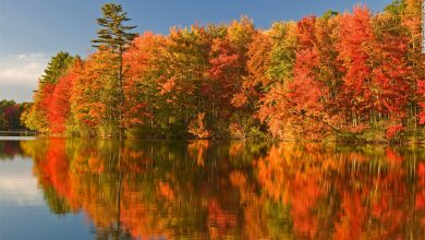 Photo of The weather is forcing foliage to fall faster and other areas are thriving