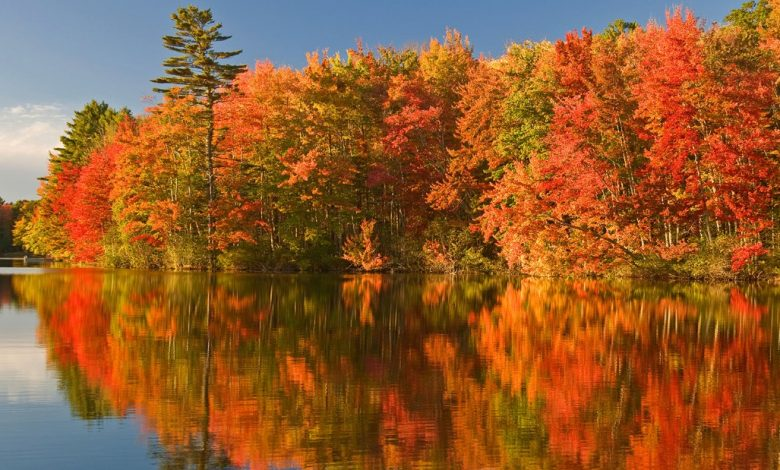 The weather is forcing foliage to fall faster and other areas are thriving