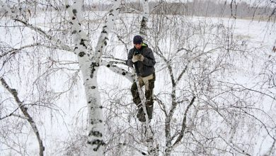 Photo of Siberian student climbs a tree to access the Internet for distance learning in a rural village