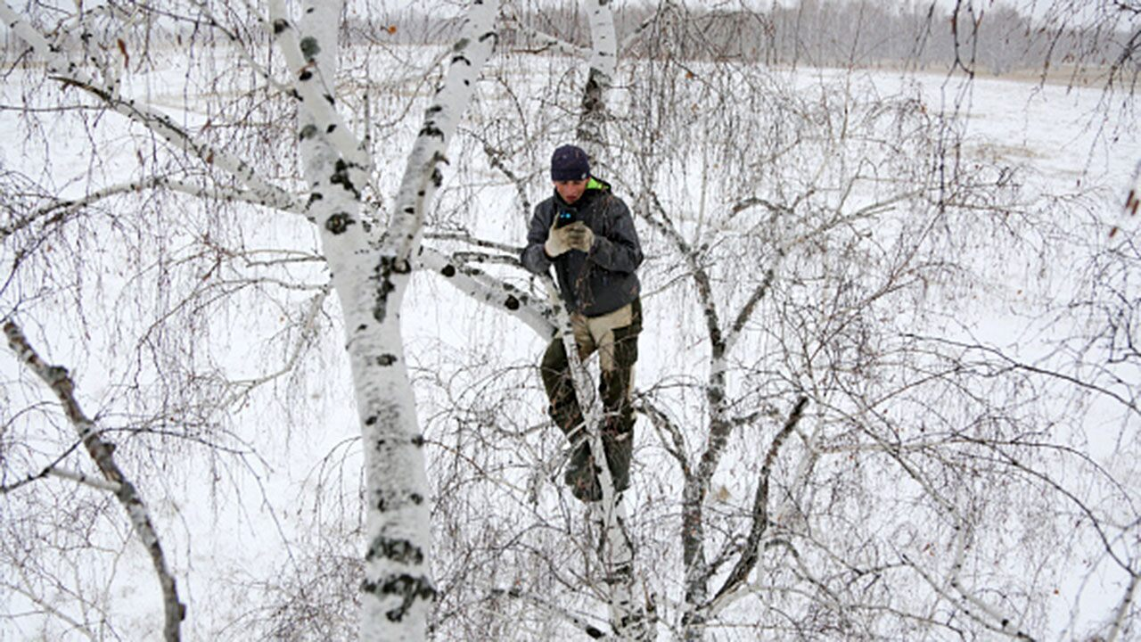 Siberian student climbs a tree to access the Internet for distance learning in a rural village