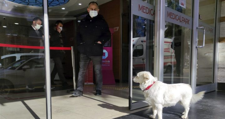 Loyal dog waits days in Turkish hospital for sick owner