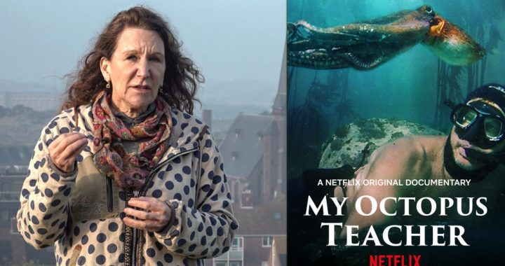 Netflix-hit My Octopus Teacher: made in Wijk aan Zee