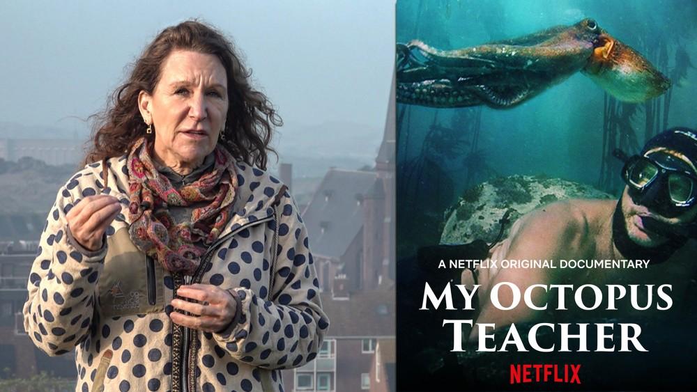 Netflix-hit My Octopus Teacher: made in Wijk aan Zee