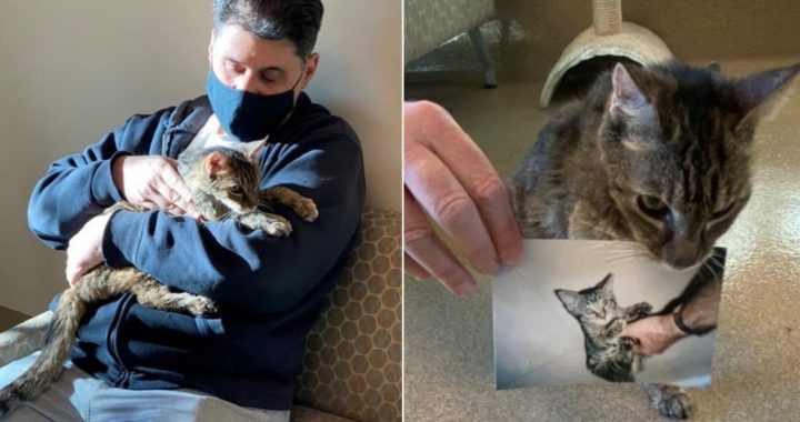 American finds runaway cat after 15 years