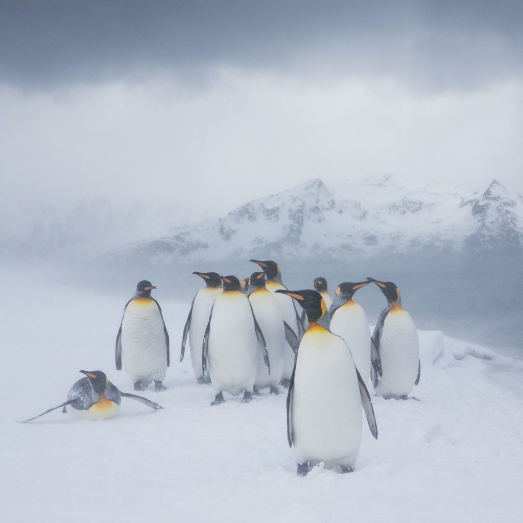 Rare yellow penguin spotted in Antarctica