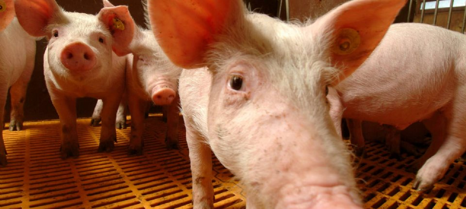 LTO: `` The province of Utrecht does not offer space for intensive breeding ''