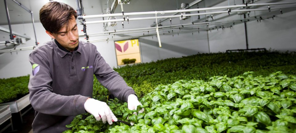 PlantLab opens the first indoor grow site in the United States