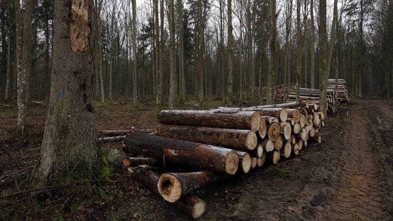 Poland wants to restart logging in Bialowieza forest