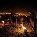 French winegrowers take stock after the frost: `` thousands of hectares lost ''