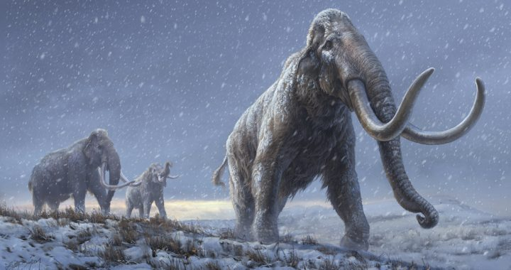 How to fight climate change by bringing back the mammoth - Wel.nl