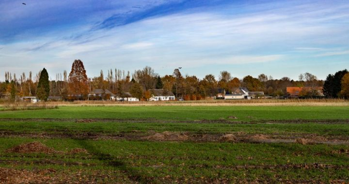 Nuenen farmer discovers care: daytime activities popular as an alternative after farm stop |  Geldrop-Mierlo, Nuenen