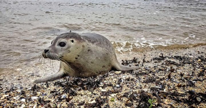 Seal bitten on the tail: the owner fined 480 euros |  Abroad