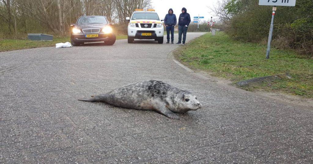 "Warning: cross horny seals.  ""They are stubborn beasts""    Zeeland"