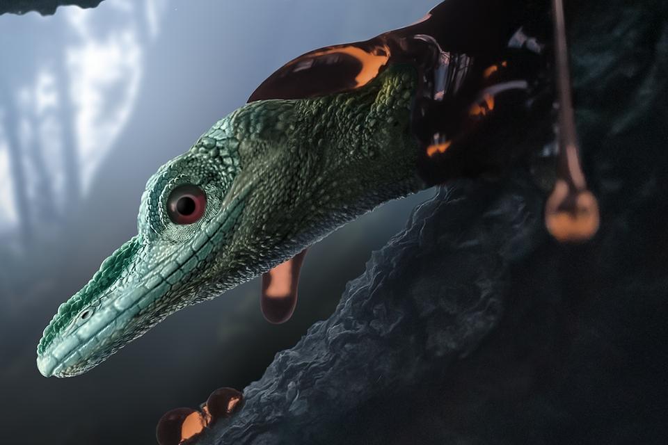Scientists continue to fight bird-like lizard