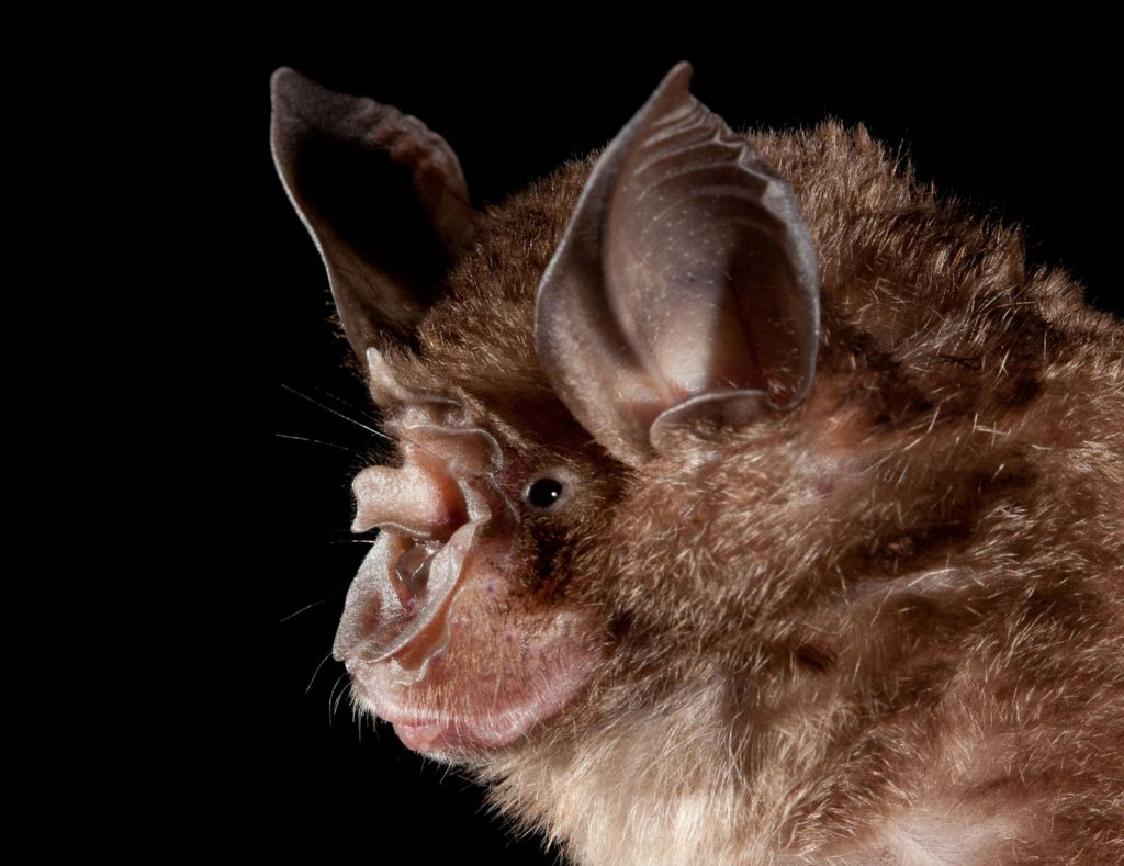 Humans create hot spots where bats can transmit zoonoses
