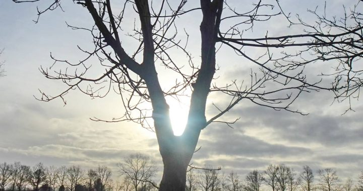 Een waterig zonnetje in Oirschot. (Foto: Peter van der Schoot)