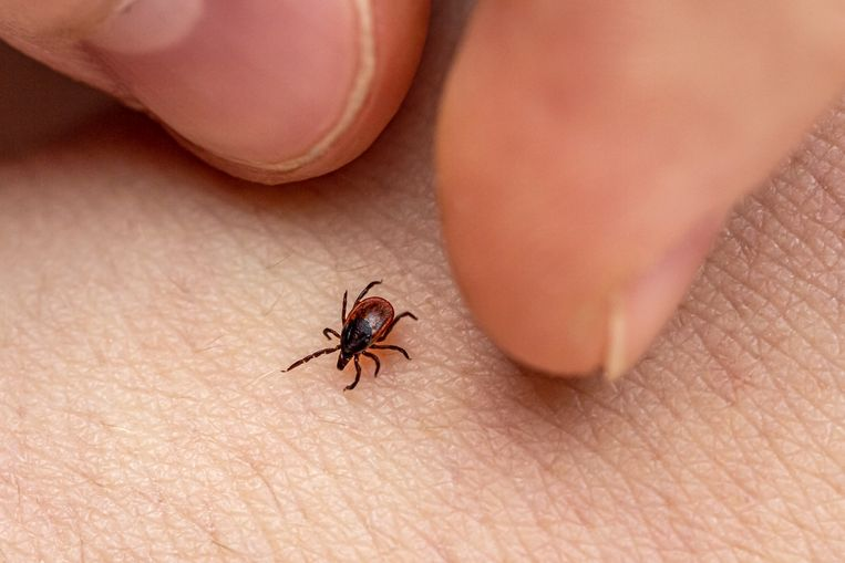 How to avoid a tick bite?