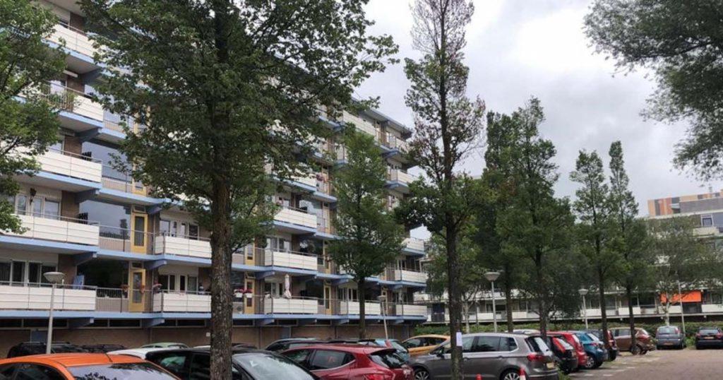 Infectious disease ravages elms in Amstelveenve