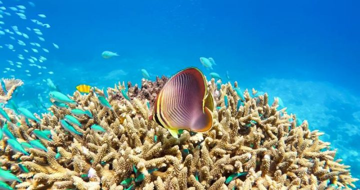 Is the Great Barrier Reef an endangered heritage?  Unesco votes, Australia is against