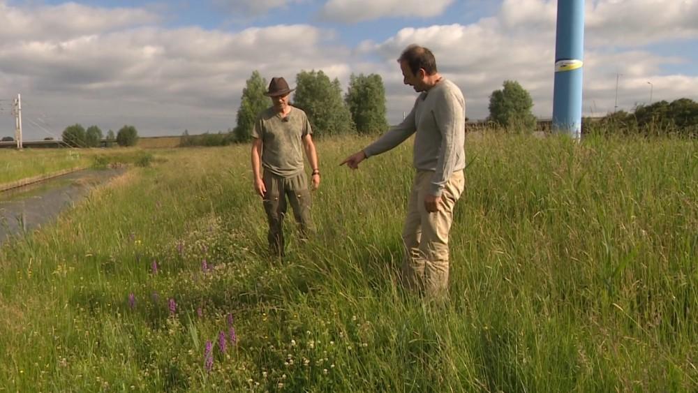 Natural North Holland: nature finds space in the Heemskerk overhoeks