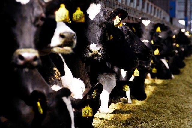 Research: microbes in cow stomachs break down plastic - Science
