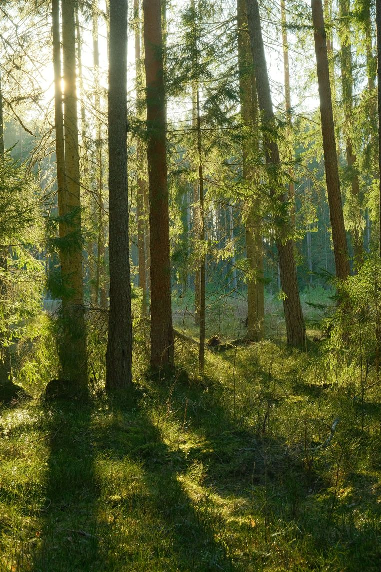 'Use of biomass from forests is not sustainable'