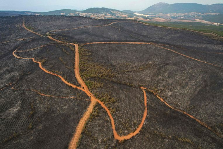 In the province of Muğla, in southwestern Turkey, nature reserves have been burnt down by forest fires.  AFP Image