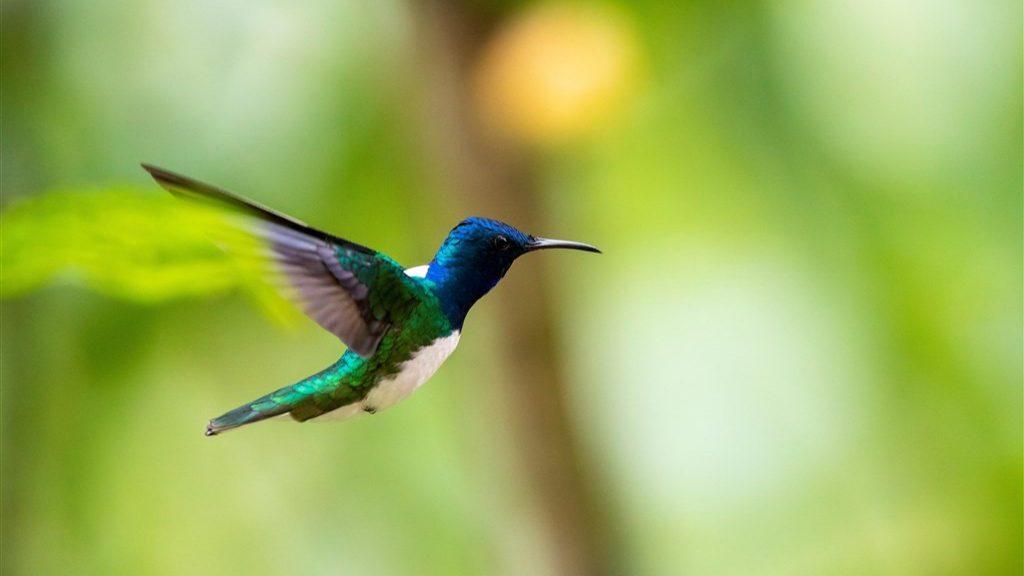 Do you repel men?  This is how female hummingbirds do