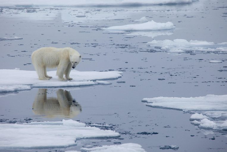 Gulf Stream threatens to stop, with icy consequences