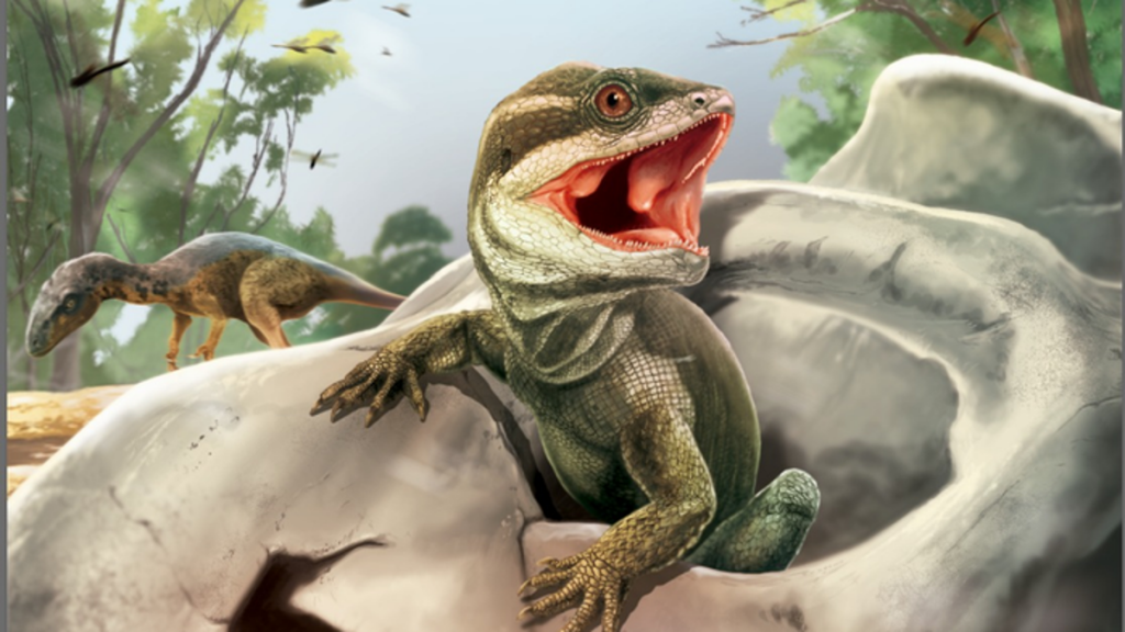 Interesting fossil reptiles provide clues to the origin of snakes and lizards