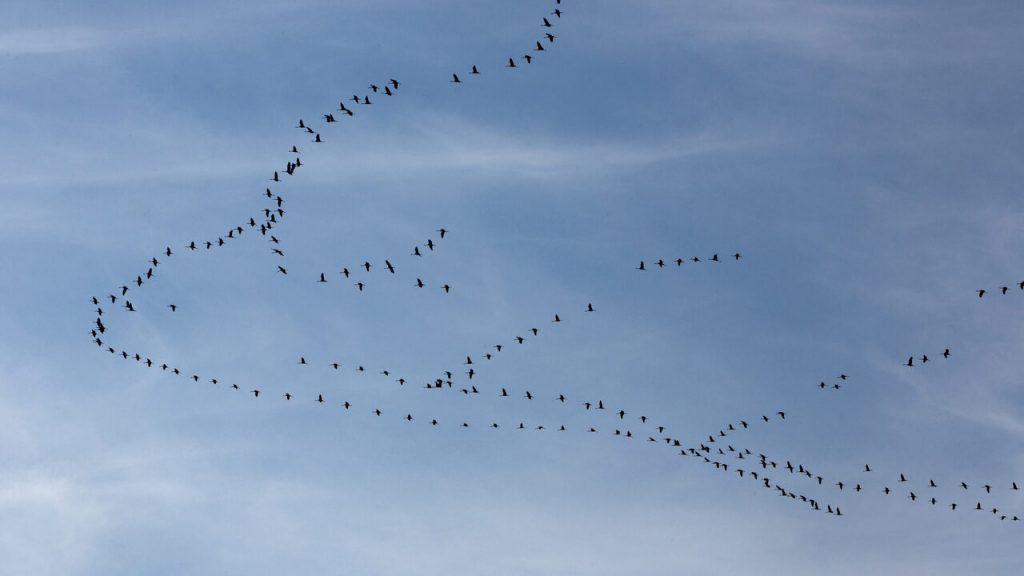 The mysterious journeys of our birds: the migration of birds