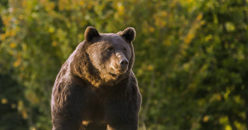 """Wealthy Russian Politician Shoots Innocent """"He Mized For A Brown Bear""""    Abroad"""