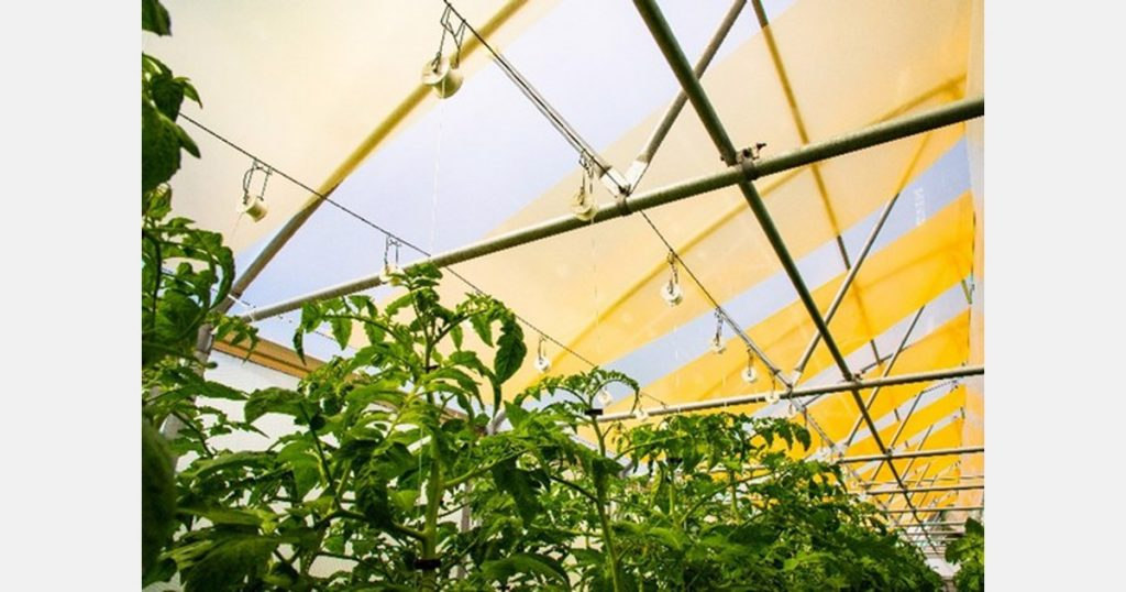 Add a layer of light in the greenhouse