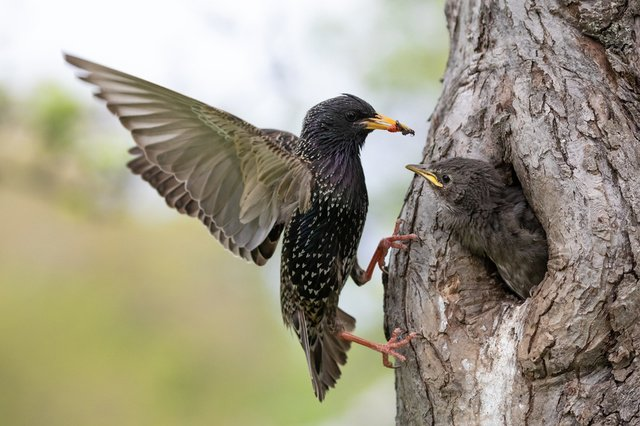 Females sing more than they think: about bird brain structure - science