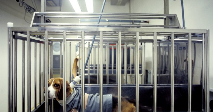 The number of animal experiments in Brussels decreases