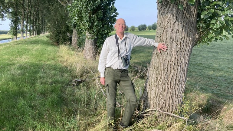 These one hundred and sixty poplars along the Kanaaldijk are cut