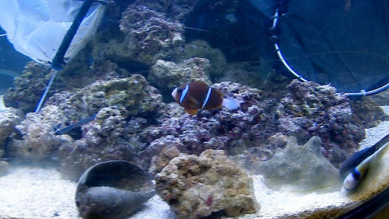 First Arsenal fish to new owner, but clownfish refuses