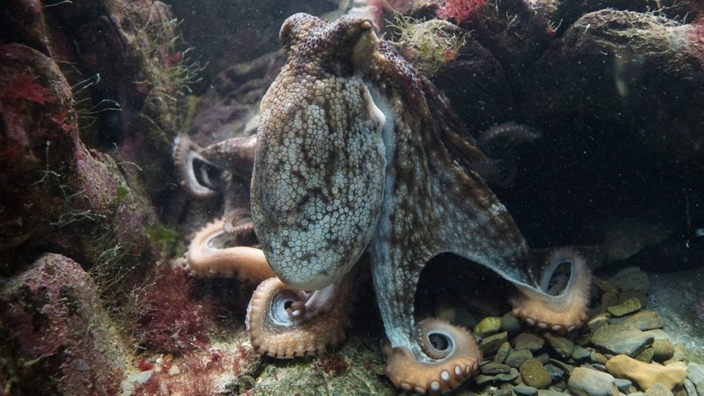 New Report on World Octopus Day vs. Octopus Farming - Early Birds