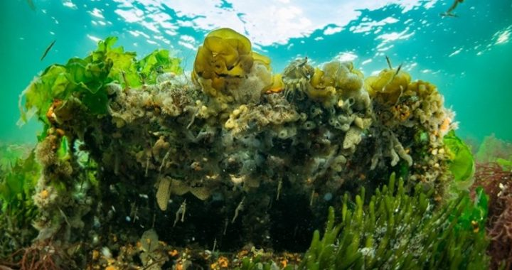 """The construction of the """"marine forest"""" in Grevelingen has started"""