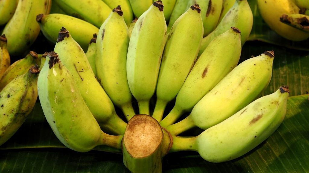 Will the Netherlands save the banana?